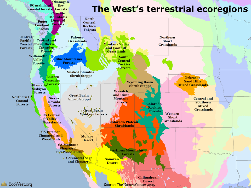 The West's terrestrial ecoregions