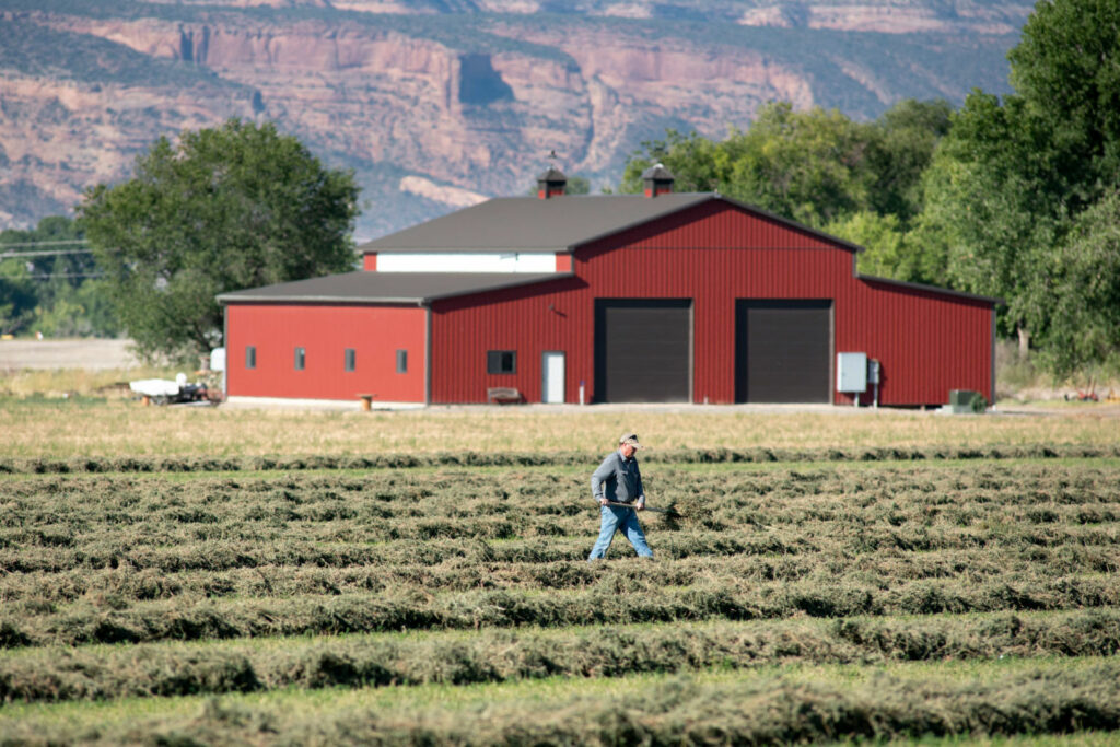 A farmer in Grand Junction, Colorado, works his alfalfa field, which is irrigated with water diverted from the Colorado River. To reduce water usage, some farmers are leaving their fields fallow in exchange for monetary compensation. PHOTO BY TED WOOD