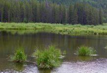Homestake Creek Wetland Photo