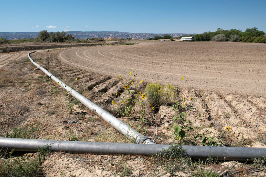 To conserve water, some farmers in the Grand Valley have turned off their irrigation pipes and let their fields go fallow in exchange for monetary compensation.