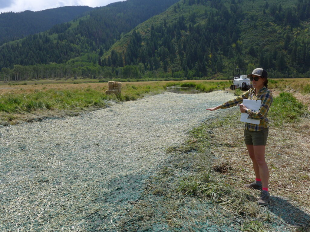 Liza Mitchell, a natural resource planner and ecologist with Pitkin County shows off the recent work on a restoration project at a fen on North Star Nature Preserve. This fiber mat is plugging an old ditch that drained water from the wetland to the Roaring Fork River.
