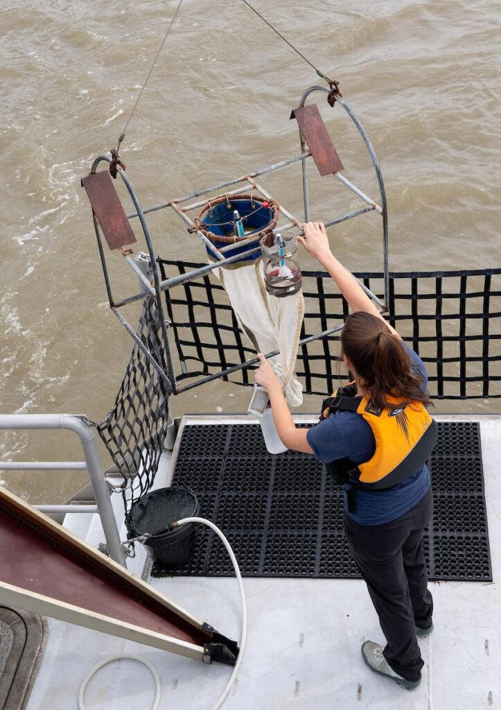 California Department of Water Resources environmental scientist Morgan Martinez checks specialized netting and water collection containers while taking water samples from the Sacramento-San Joaquin Delta. (Source: California Department of Water Resources)