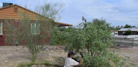 Madeline Ryder planting mesquite in an in-ground rainwater harvesting basin in the Sugar Hill neighborhood of Tucson, Arizona. Source: Watershed Management Group
