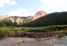 Beaver dam photo