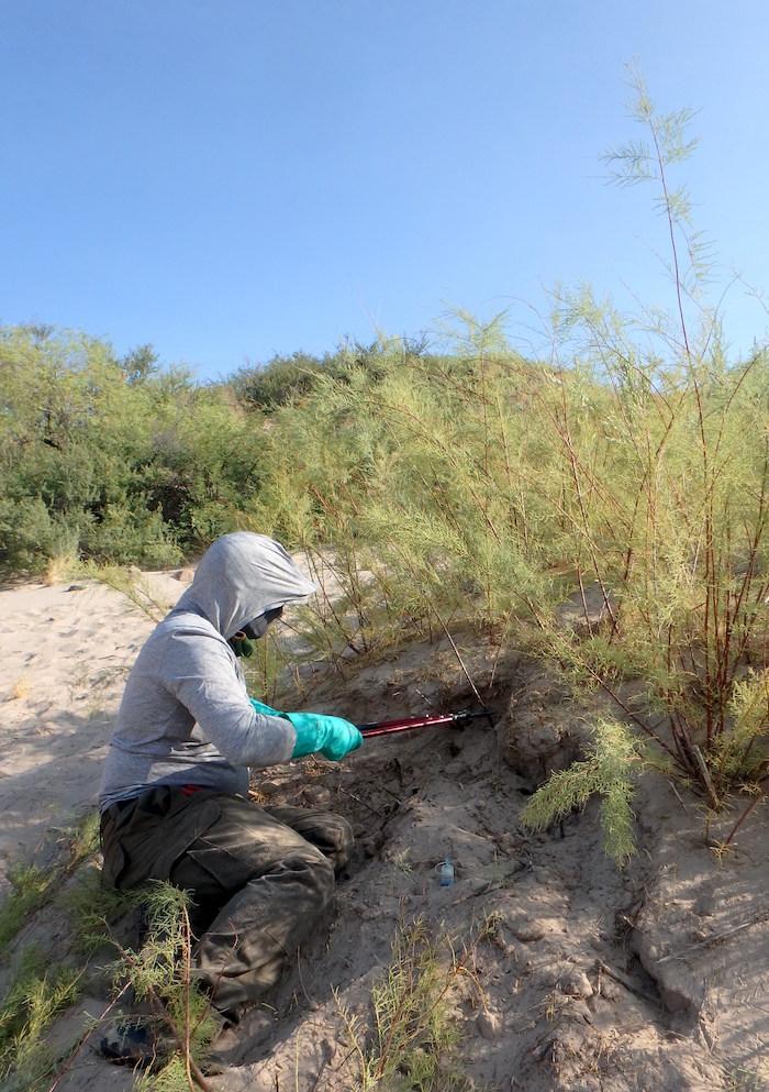 Vegetation crew member photo