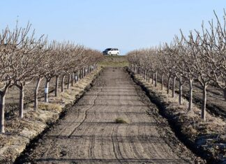 Kettleman City orchard photo