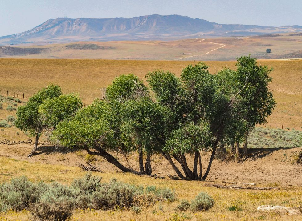 Drought at Little Bear Ranch photo