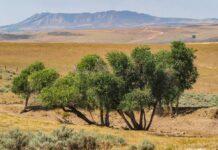 Little Bear Ranch photo